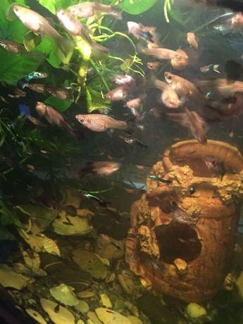 Рыбки гуппи Аквариумные растения