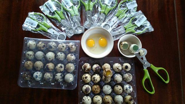Ножниці для перепелиних яєць. Ножницы для перепелиных яиц