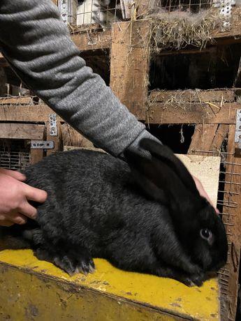 Кроликі