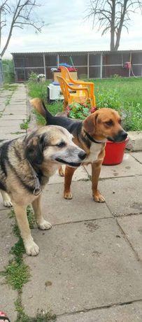 Momo i Toto do adopcji