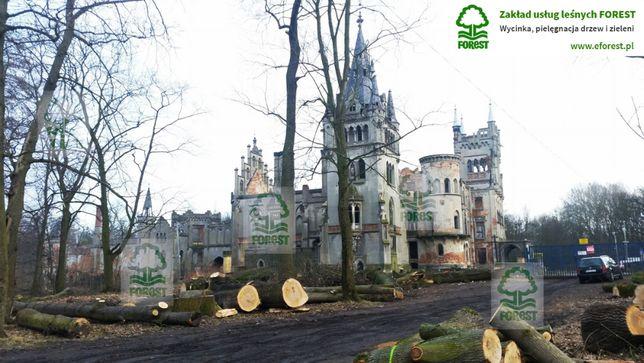 Wycinka drzew, cięcia techniczne, frezowanie pni, rębakowanie