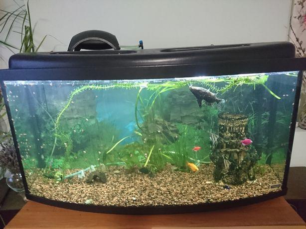 Аквариум 180 литров выпуклый, с рыбками.