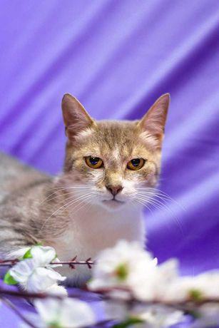 Кошка Маргоша, настоящее мурчащее золото (4 годика, стерилизована)