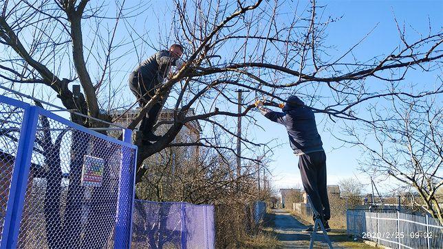 Осенняя ОБРЕЗКА деревьев, обрезка деревьев осенью, лечение дерева