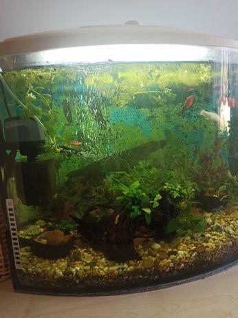 Sprzedam akwarium z wyposażeniem i rybkami
