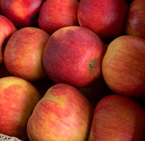 Продаю яблука ЛІГОЛЬ,ЧЕМПІОН