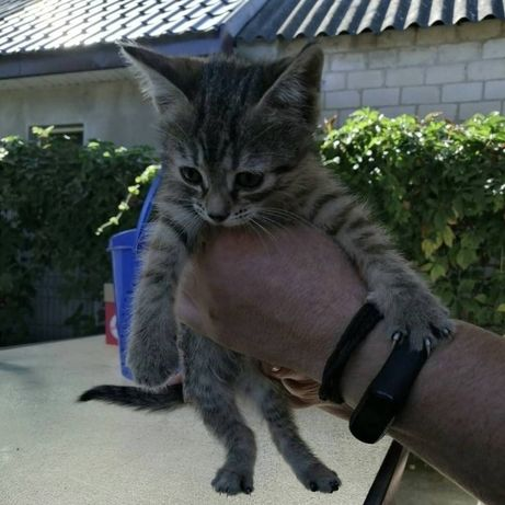 Срочно котятам нужны хозяева.
