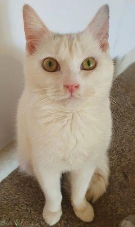 Веста кошечка, 1 годик. Котики, котята, кошечка, кот, котенок