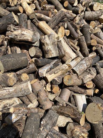 Drzewo drewno opałowe rozpałkowe