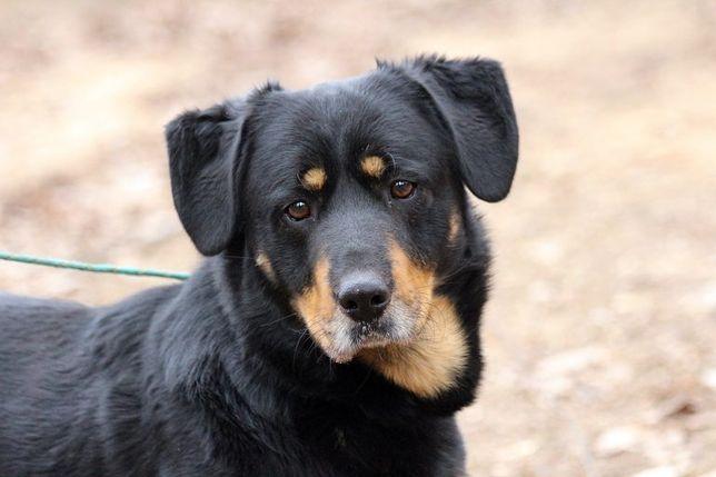 Bas – dostojny pies do adopcji