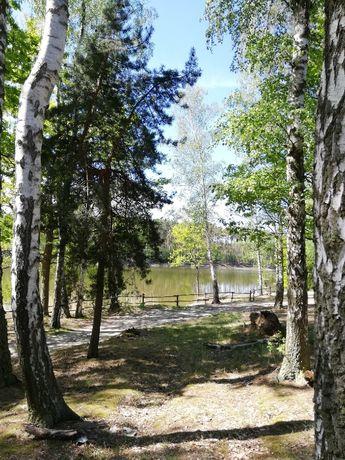 Działka Sieraków. 300 m od jeziora. 4454 m2. Spokojna okolica.
