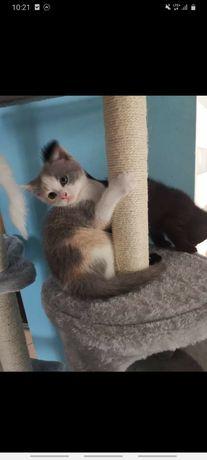 Ostatnie kotki do rezerwacji