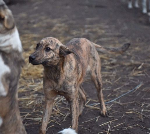 Собака, щенок, в добрые руки, киев бесплатно