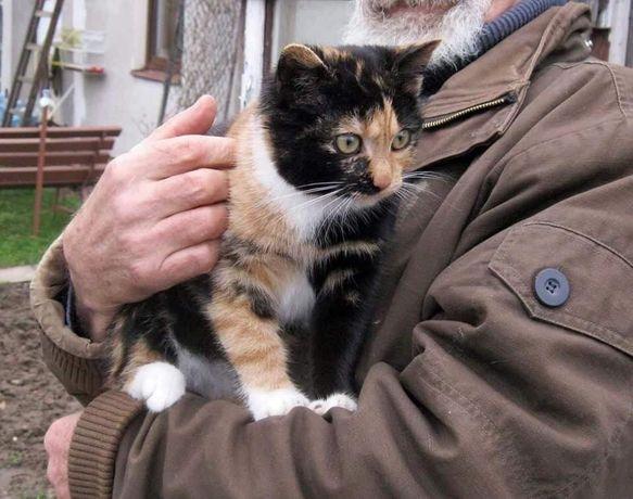 Urocza kotka szuka domu