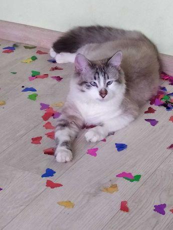 Пропал любимый кот