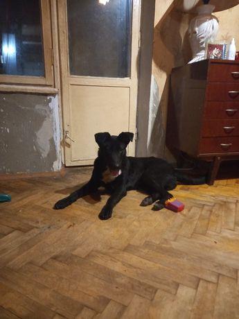 Найден щенок Бабурка был домашний