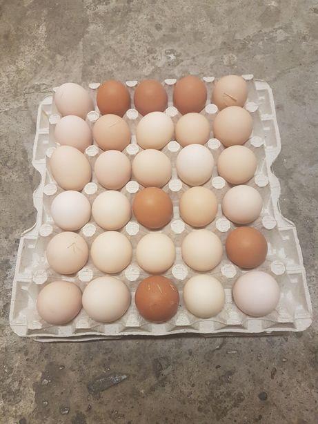 Wiejskie jaja jajka od kur z hodowli naturalnej