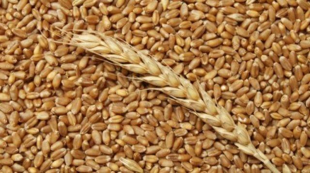 Пшениця 2021 року