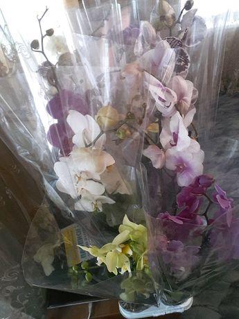 Продам цветочный бизнес.