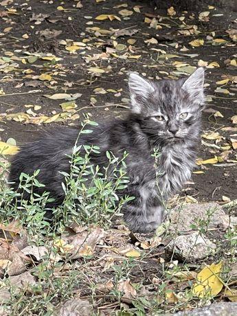 Котенок ищет дом! Срочно 2,5 месяца