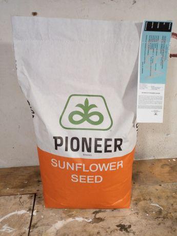 Семена Пионер 66