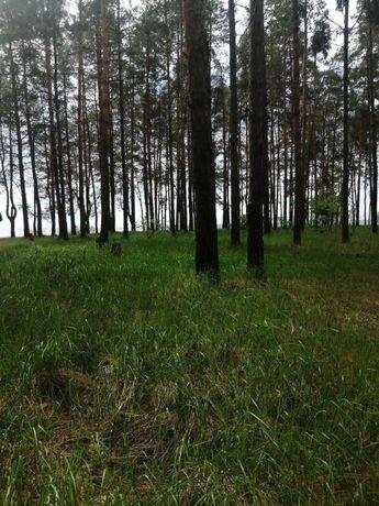 Продажа участка  пл.  от 50 га в лесу,  35 км. от Киева, недорого