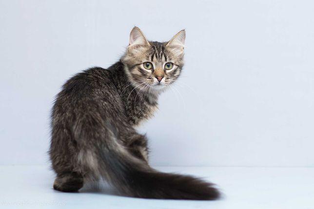Отдам в хорошие руки чудесного котика подростка Бриско.