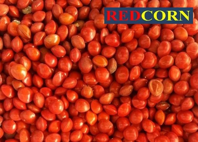 Краска для семян REDCORN (инкрустация семян),жидкая (концентрат 1/3)