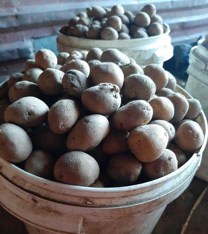 Odpady ziemniaka, ziemniaki odpadowe