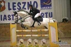 Konie ogiery zimnokrwiste i szlachetne