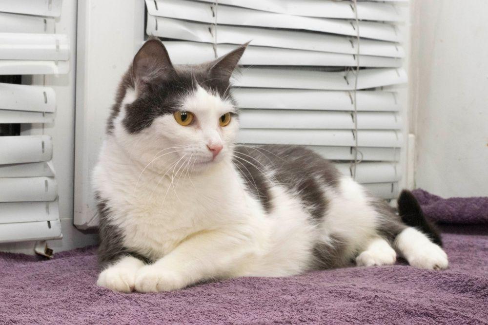 Кошечка-подружка Соня-Грей (11 месяцев) СРОЧНО отдаётся в добрые ручки