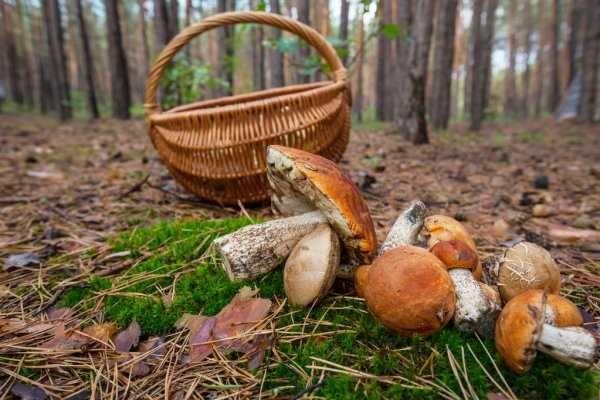 Поездки за грибами