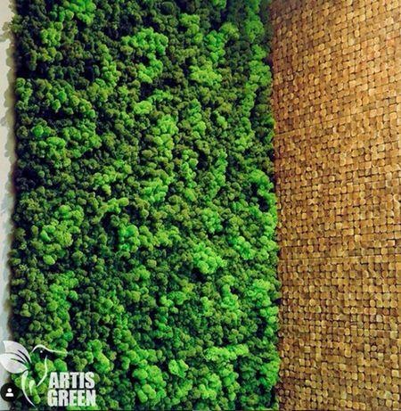 Озеленение из мха и стабилизированнных растений