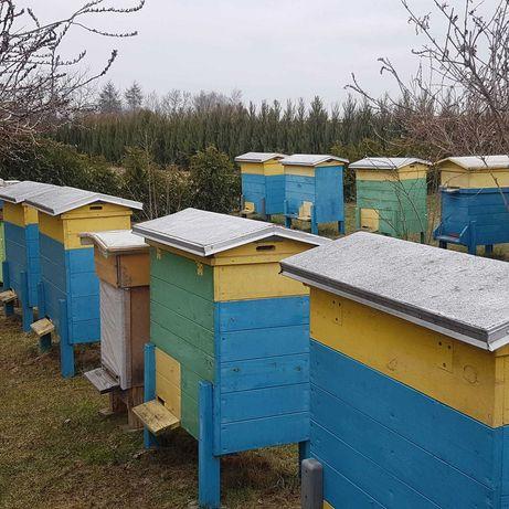Sprzedam pszczoły ramka warszawska zwykła