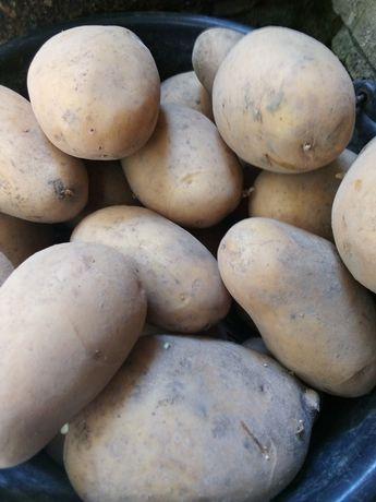 Картопля Королева Анна.