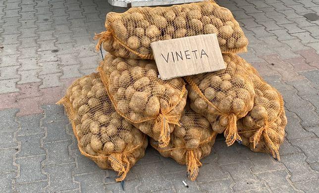 Sprzedam ziemniaki jadalne Vineta z dostawa