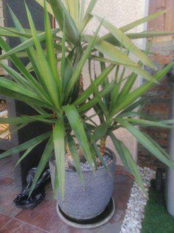 Plantas com vaso