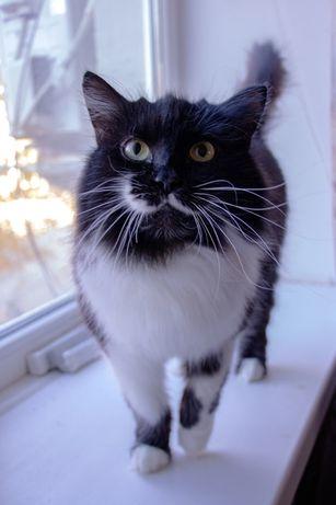 Кошка, котики, котята бесплатно в добрые руки