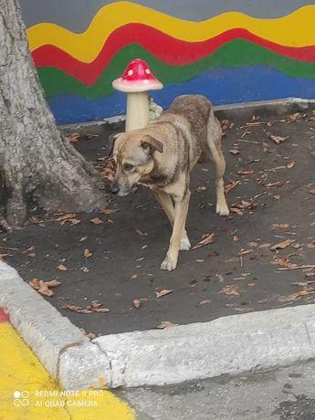 Собака потерялась заберите добрые люди