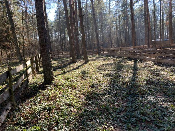 Dzierżawa działki nad jeziorem Głębokim k.Żukowa
