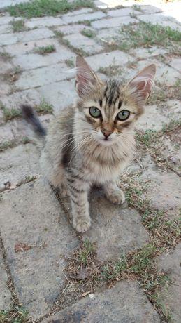 Милые котики ищут семью