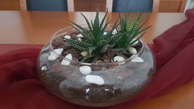 Vaso de vidro com cacto natural