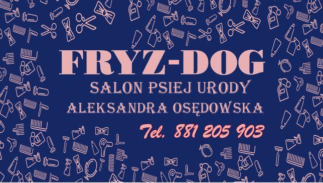 Fryz-Dog Salon Psiej Urody. PSI FRYZJER . KIELCE - ZAGÓRSKA 38