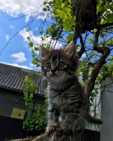 Котик дівчинка