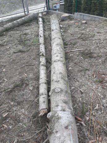Sprzedam drzewa.