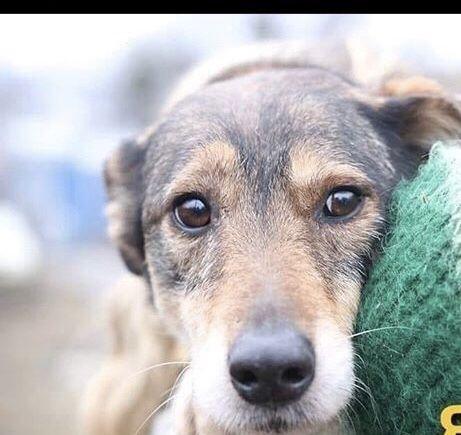 SOS Верная собака ищет семью!