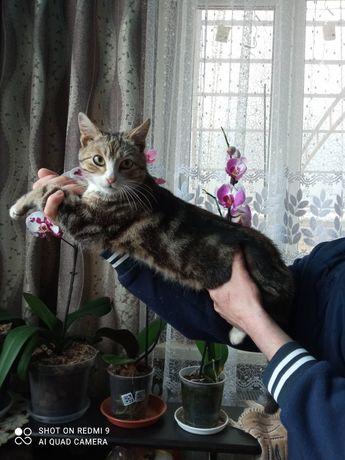 Бельгийский кот очень красивый