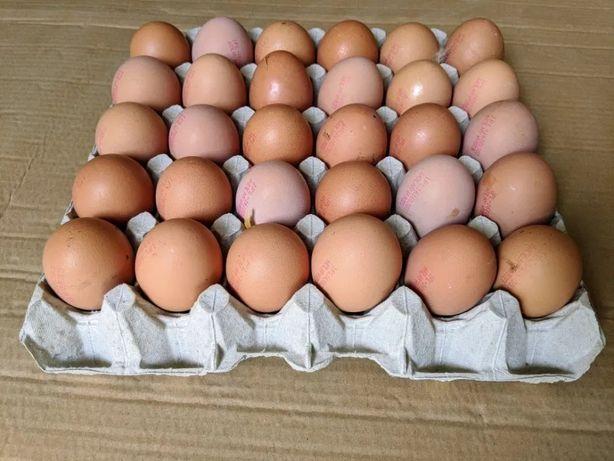 Świeże Jaja z Wolnego Wybiegu 1PL Wolny Wybieg Jajka L 30szt - 18zł