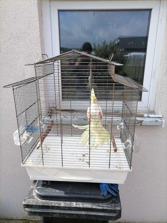 Klatka wraz z papugom