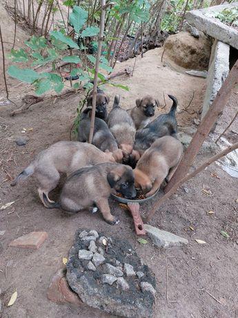 Найдено 8 Щенков в Лесу!!! Нужна помощь